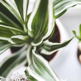 sqr-nature-flowers-white-plants