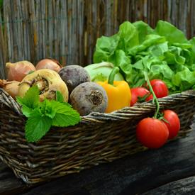 sqr-vegetables-vegetable-basket-harvest-garden